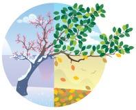 Ciclo di stagioni illustrazione vettoriale