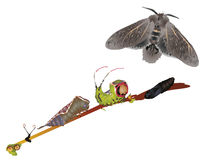 Ciclo di vita del lepidottero del micio Immagini Stock