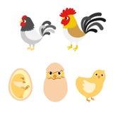 Ciclo di vita dell'uovo del pollo royalty illustrazione gratis