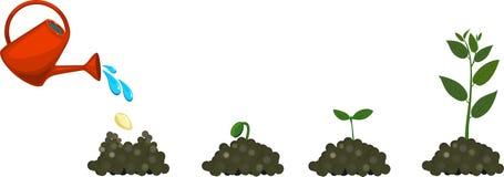 Ciclo di vita della pianta illustrazione vettoriale