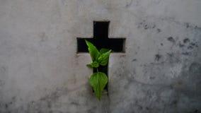 """Ciclo di vita, pianta del †di vita e morte """"che balza da una tomba al cimitero di Recoleta della La a Buenos Aires fotografie stock"""