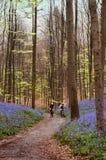 Ciclo en las maderas Fotografía de archivo