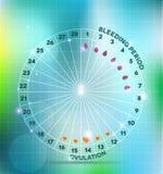 Ciclo menstrual Imagenes de archivo