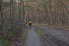 Ciclo na floresta Foto de Stock