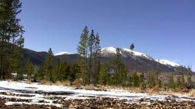 (Ciclo perfetto) scena alpina Windy Trees archivi video