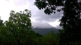 (Ciclo perfetto) tropici piovosi della montagna della giungla video d archivio