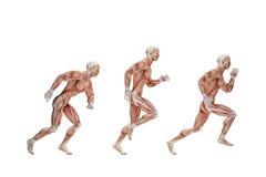 Ciclo running Ilustração anatômica Isolado Contém o clipp Imagem de Stock Royalty Free