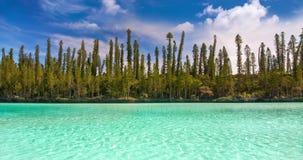 Ciclo senza cuciture, stagno naturale della baia di Oro, attrazione famosa nell'isola dei pini, Nuova Caledonia archivi video