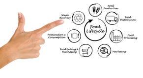 Ciclo vital de la comida Imagen de archivo libre de regalías