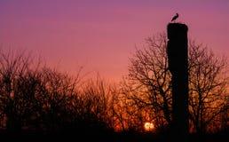 Cicogna al tramonto Fotografie Stock Libere da Diritti