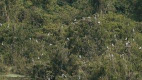 Cicogna asiatica di Openbill video d archivio