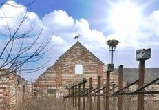 Cicogna bianca (ciconia di Ciconia) in azienda agricola abbandonata fotografia stock libera da diritti