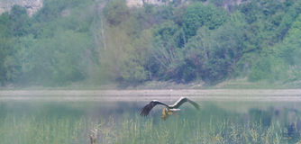 Cicogna bianca sulla sponda del fiume fotografie stock