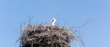 Cicogna che aspetta nel suo nido Immagine Stock