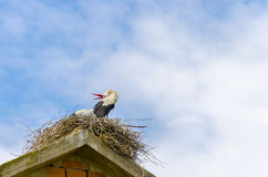 Cicogna che fa ballo di amore nel nido Fotografie Stock