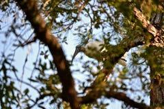 Cicogna di legno di migrazione fotografia stock libera da diritti