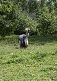 Cicogna di Maribo nel giardino dell'uccello alla bella casa di campagna vicino a Leeds West Yorkshire che non è la fiducia nazion Fotografia Stock