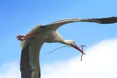 Cicogna di volo Fotografie Stock