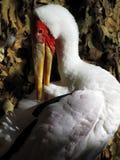 Cicogna fatturata colore giallo Fotografia Stock Libera da Diritti