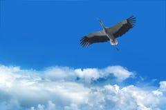 Cicogna nel cielo Fotografie Stock