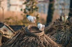 Cicogna nel nido fotografia stock