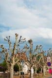 Cicogna nel nido dell'albero Fotografia Stock Libera da Diritti