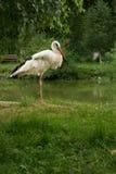 Cicogna nel parco immagine stock
