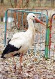 Cicogna nel parco di autunno Fotografie Stock
