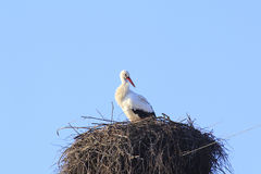 Cicogna in nido Fotografie Stock Libere da Diritti