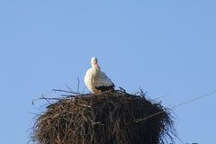 Cicogna in nido Immagini Stock Libere da Diritti