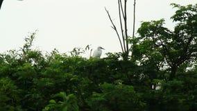 Cicogna sull'albero stock footage