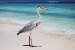 Cicogna sull'oceano Fotografia Stock Libera da Diritti