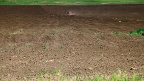 Cicogne che foraggiano nel campo arato Immagini Stock Libere da Diritti