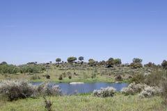 Cicogne e pietre Parco naturale di Barruecos, Spagna Fotografie Stock