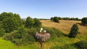 Cicogne nel nido archivi video