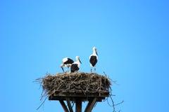 Cicogne in nido sul tetto della casa Fotografie Stock Libere da Diritti