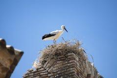 Cicogne sul nido nell'Aragona Fotografie Stock