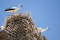 Cicogne sul nido nell'Aragona Fotografia Stock