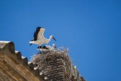 Cicogne sul nido nell'Aragona Immagine Stock Libera da Diritti