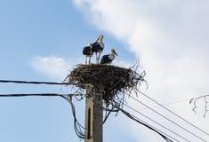 Cicogne in un nido fotografie stock libere da diritti