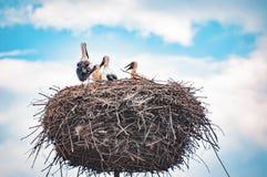Ciconia ciconia - glückliche Familie des weißen Storchs, die Mutter mit ihrer Nachkommenschaft lizenzfreie stockfotografie