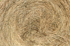 Cicular haystack. Freshly wheel shaped haystack recently harvested in a grass field royalty free stock photography