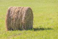 Cicular haystack. Freshly wheel shaped haystack recently harvested in a grass field Royalty Free Stock Photos