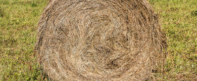 Cicular haystack. Freshly wheel shaped haystack recently harvested in a grass field Royalty Free Stock Images