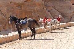 A cidade antiga de PETRA, Jordão. imagens de stock royalty free