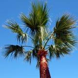 Cidade Chipre de Protaras da palmeira Fotos de Stock
