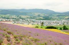 Cidade da flor Fotografia de Stock