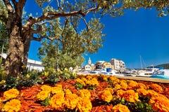 Cidade da opinião das flores e de oliveira de Pirovac imagens de stock royalty free