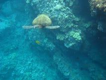 Cidade da tartaruga Foto de Stock