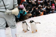 Cidade de Asahikawa, Hokkaido, Japão 13 DE MARÇO DE 2019: A parada dos pinguins ao andar através da neve no jardim zoológico de A foto de stock royalty free
